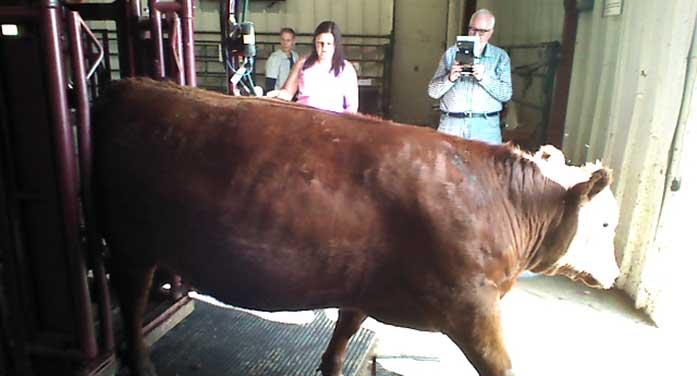 'Armchair rancher' app helps beef producers get ahead of trends